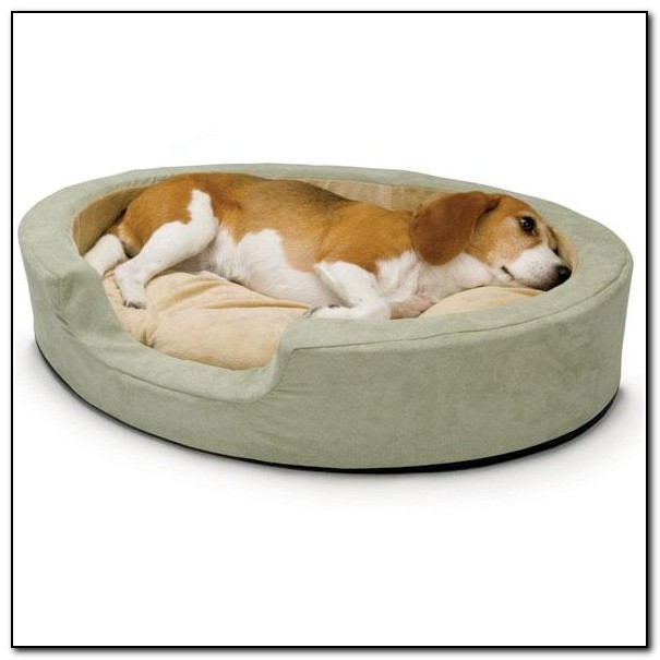 Outdoor Dog Beds For Winter