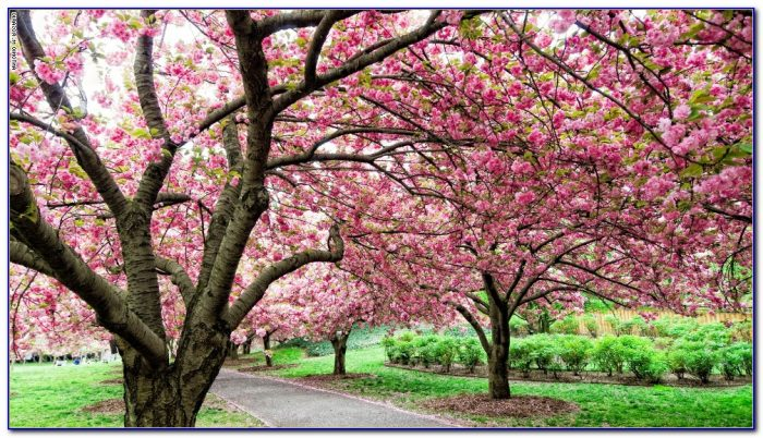 Brooklyn botanical garden cherry blossom tickets garden for Garden design fest 2014