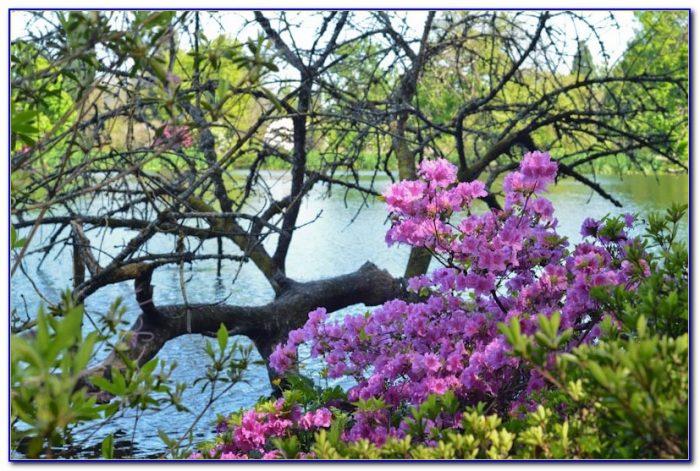 Crystal Springs Rhododendron Garden Portland