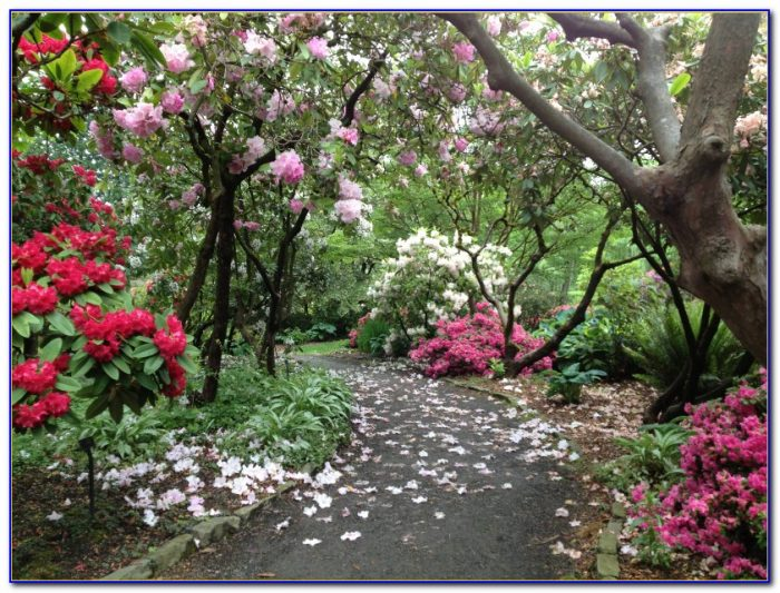 Crystal Springs Rhododendron Garden Portland Oregon