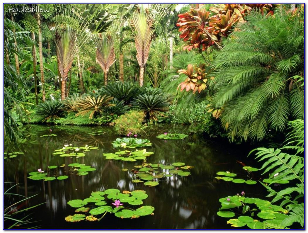 Hawaii tropical botanical garden big island garden for Botanical garden design