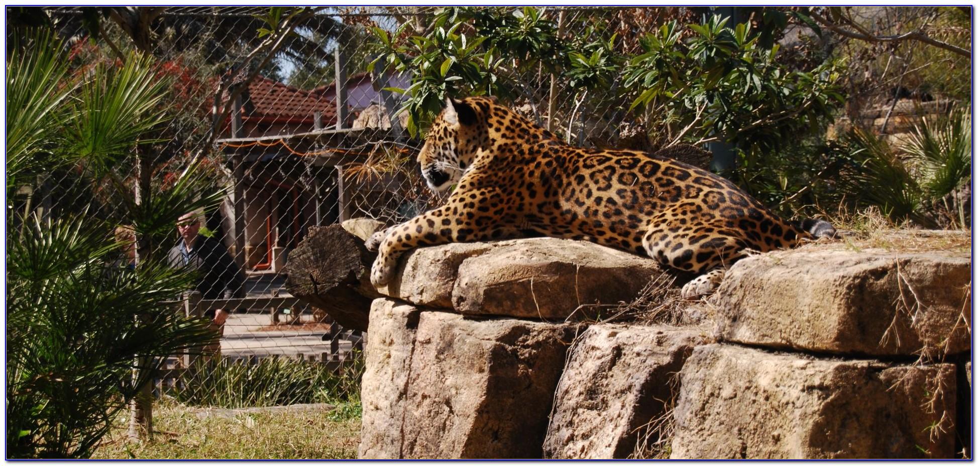Jacksonville Zoo And Gardens Jobs
