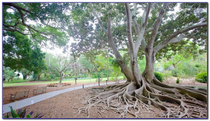Marie Selby Botanical Gardens Sarasota Fl