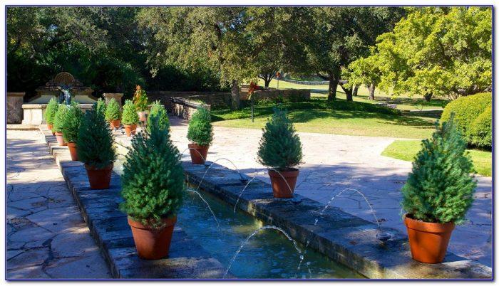 San Antonio Botanical Gardens Halloween