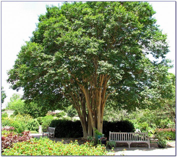 San Antonio Botanical Gardens Hours