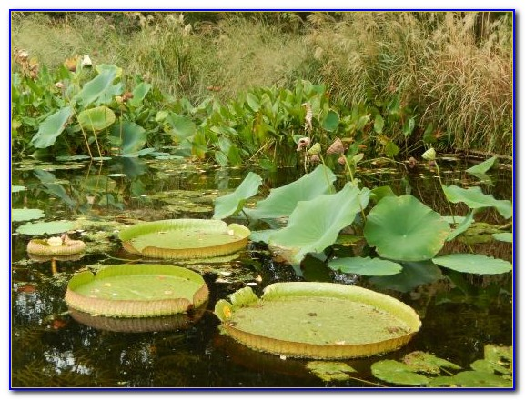 San Diego Botanical Gardens Free Tuesday Garden Home Design Ideas Kypzg5qnoq50968