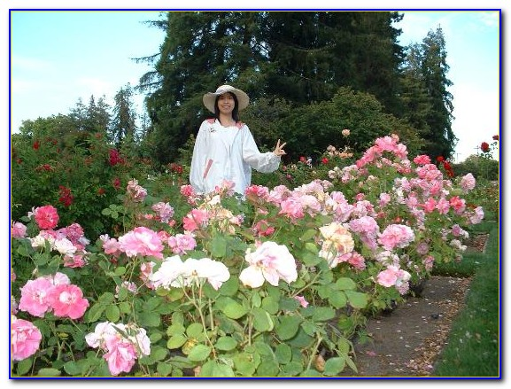 Roses In Garden: San Jose Municipal Rose Garden Photo Permit