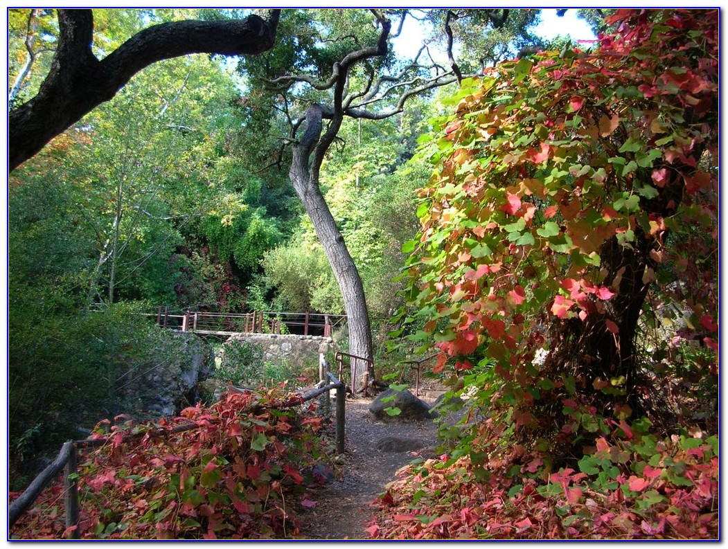 Santa barbara botanic garden hours garden home design for Botanical gardens hours