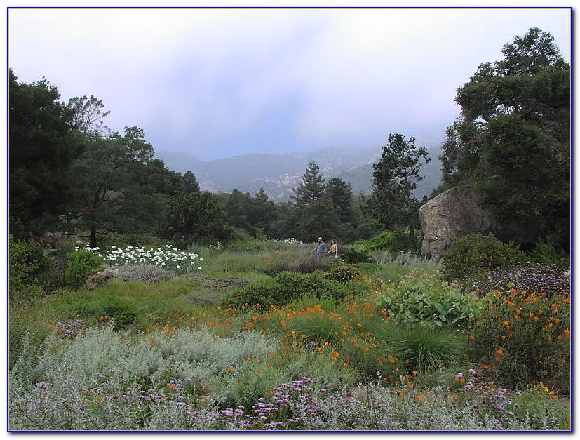 Santa barbara botanical gardens jobs download page home for Botanical gardens santa barbara
