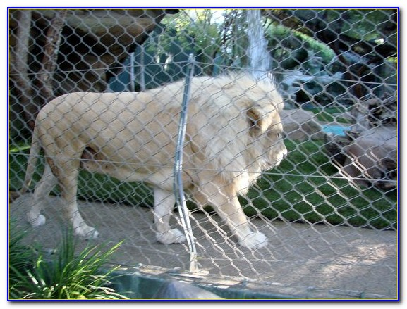 Siegfried And Roy Secret Garden Coupon