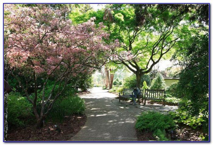 Botanical Gardens Atlanta Ga Lights Garden Home Design Ideas Kvndvroq5w52659