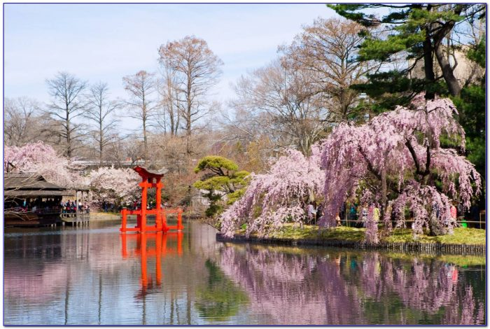 Brooklyn Botanical Garden Cherry Blossom Tickets Garden Home Design Ideas 6ldyjb9q0e51631