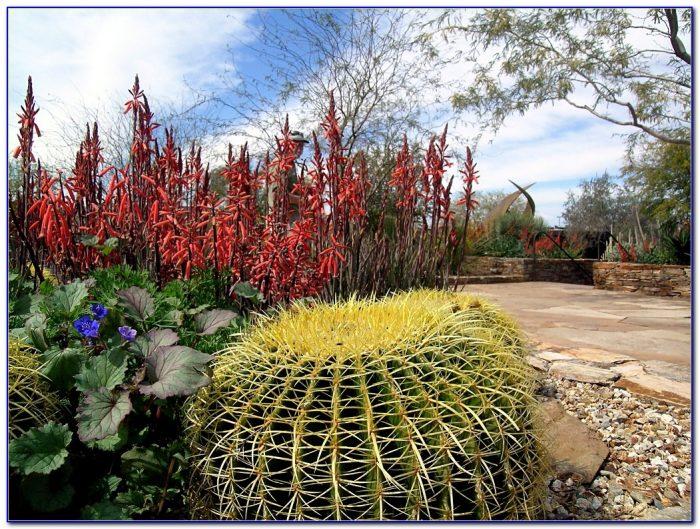 Desert Botanical Garden Phoenix Hours Garden Home Design Ideas 4vn4gz9pne54083