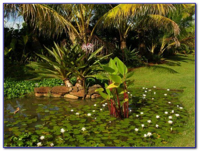 National Tropical Botanical Garden Florida Garden Home Design Ideas Zwnby3jpvy54221