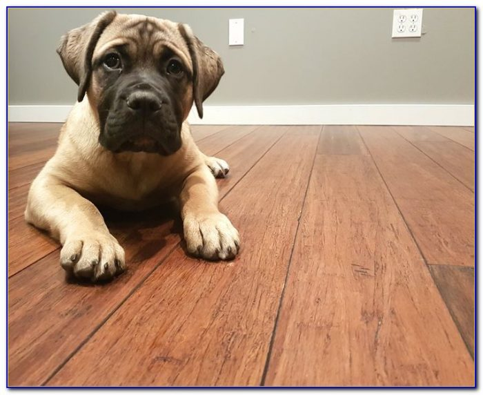 Bamboo Wood Floors And Dogs