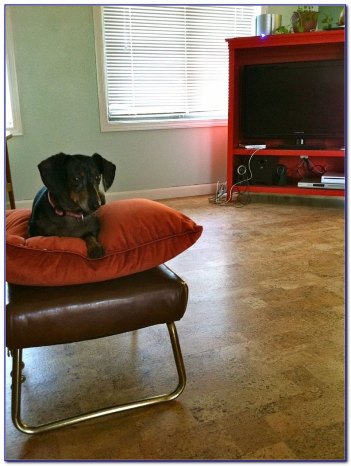 Cork Flooring And Dogs