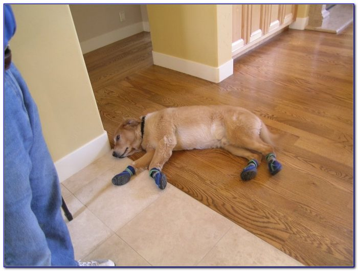Hardwood Floors Bad For Dogs