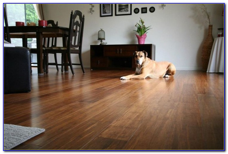 Strand Bamboo Flooring And Dogs